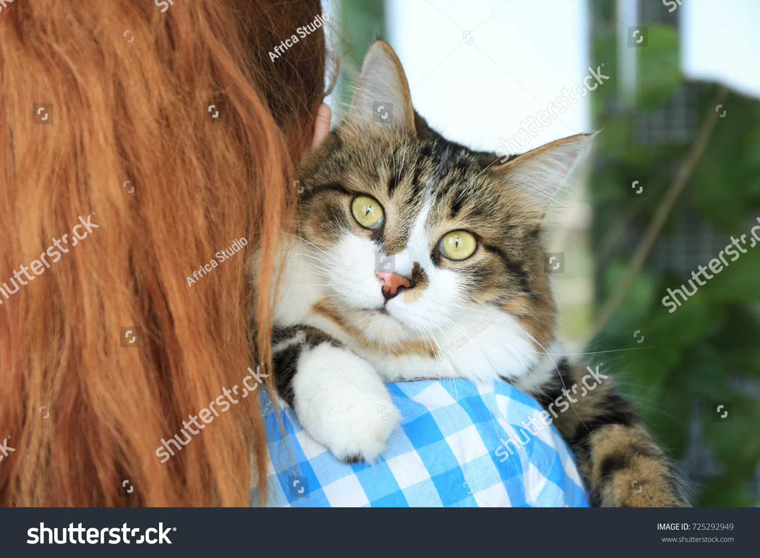 Woman Holding Fluffy Cat Adoption Concept Stock