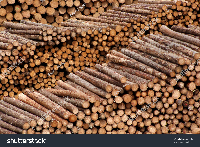 Wonderful piles fresh pine trees lumber stock photo for Pine tree timber