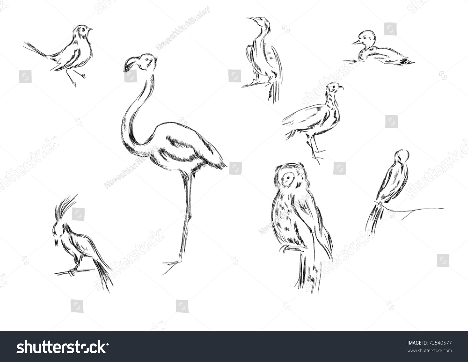 this image shows different types birds stock illustration 72540577