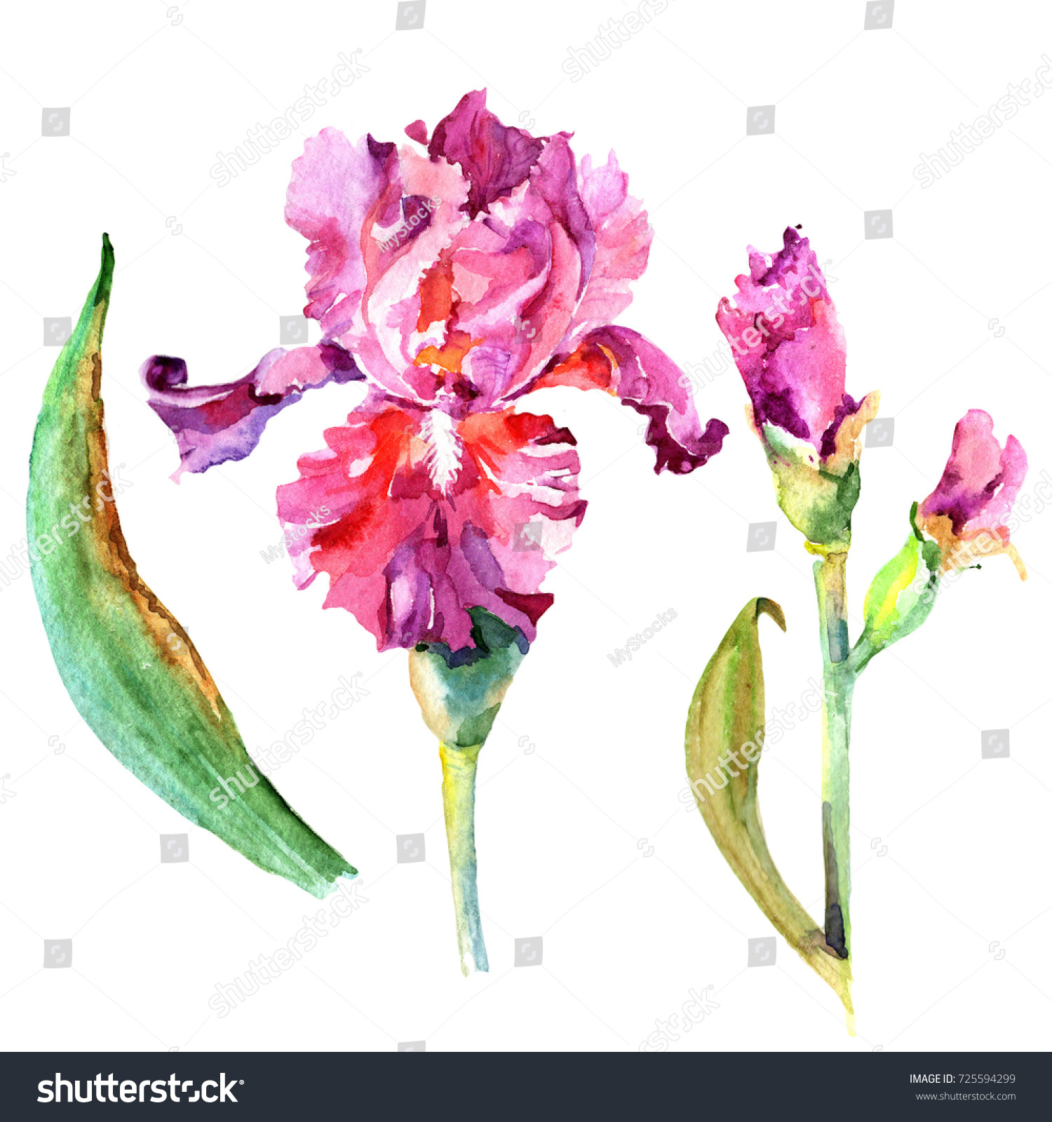 Wildflower Iris Flower Watercolor Style Isolated Stock Illustration