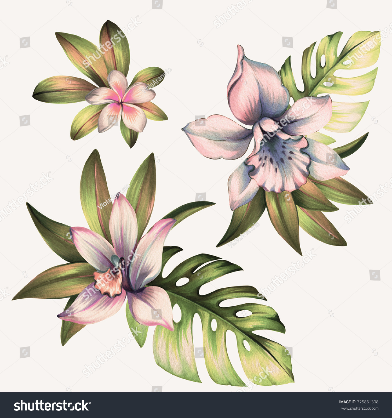 Set Orchid Flowers Bouquets Tropical Leaves Stock Illustration ...