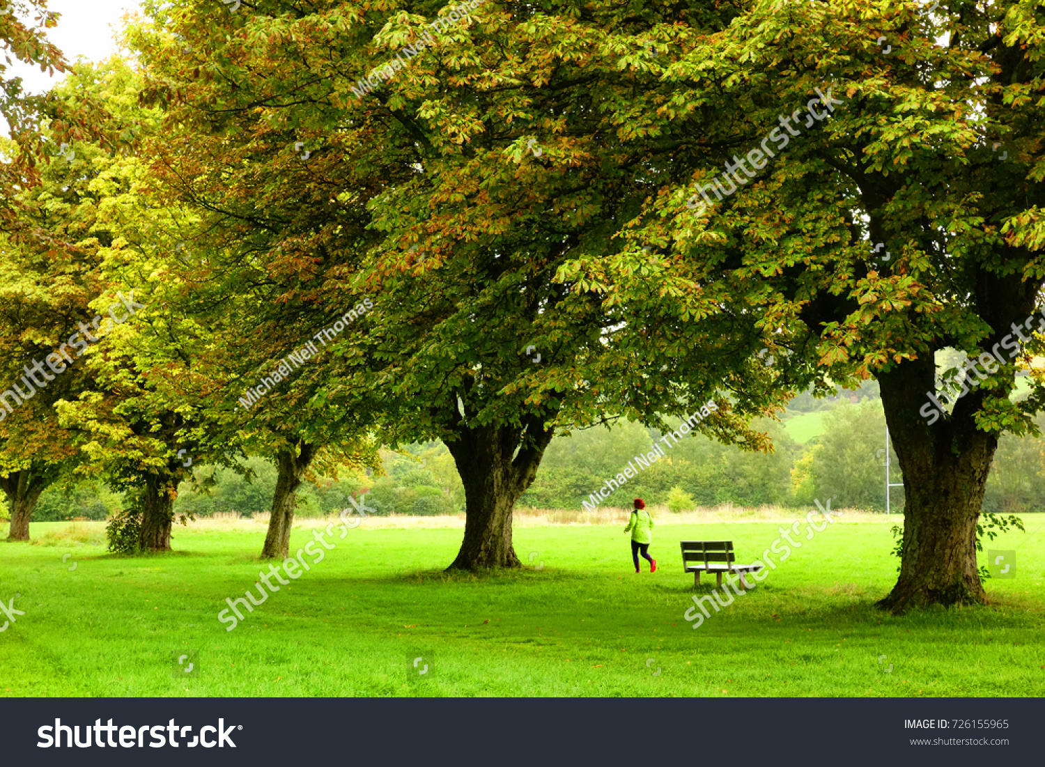 Avenue Horse Chestnut Trees Seen Autumn Stock Photo (Royalty Free ...