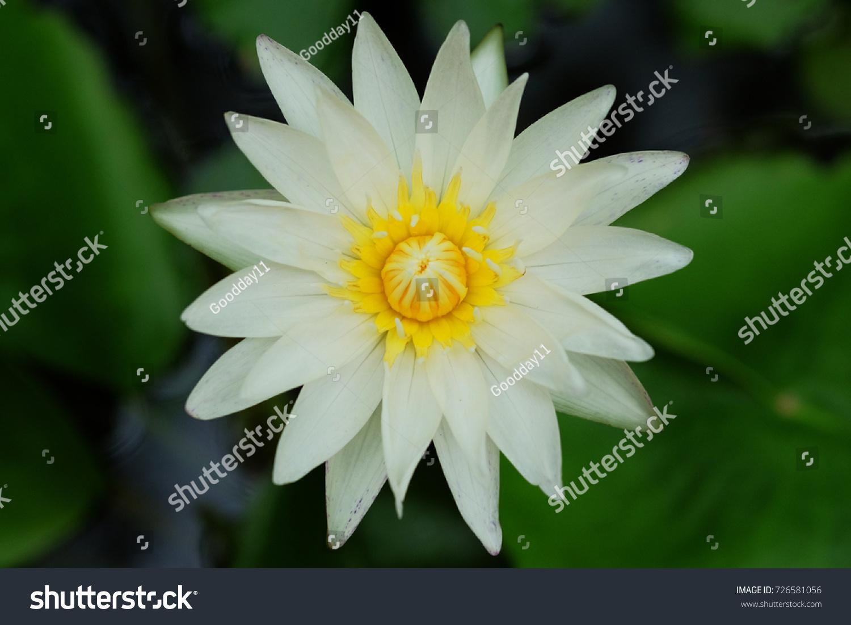 Colorful Lotus Flower Ez Canvas