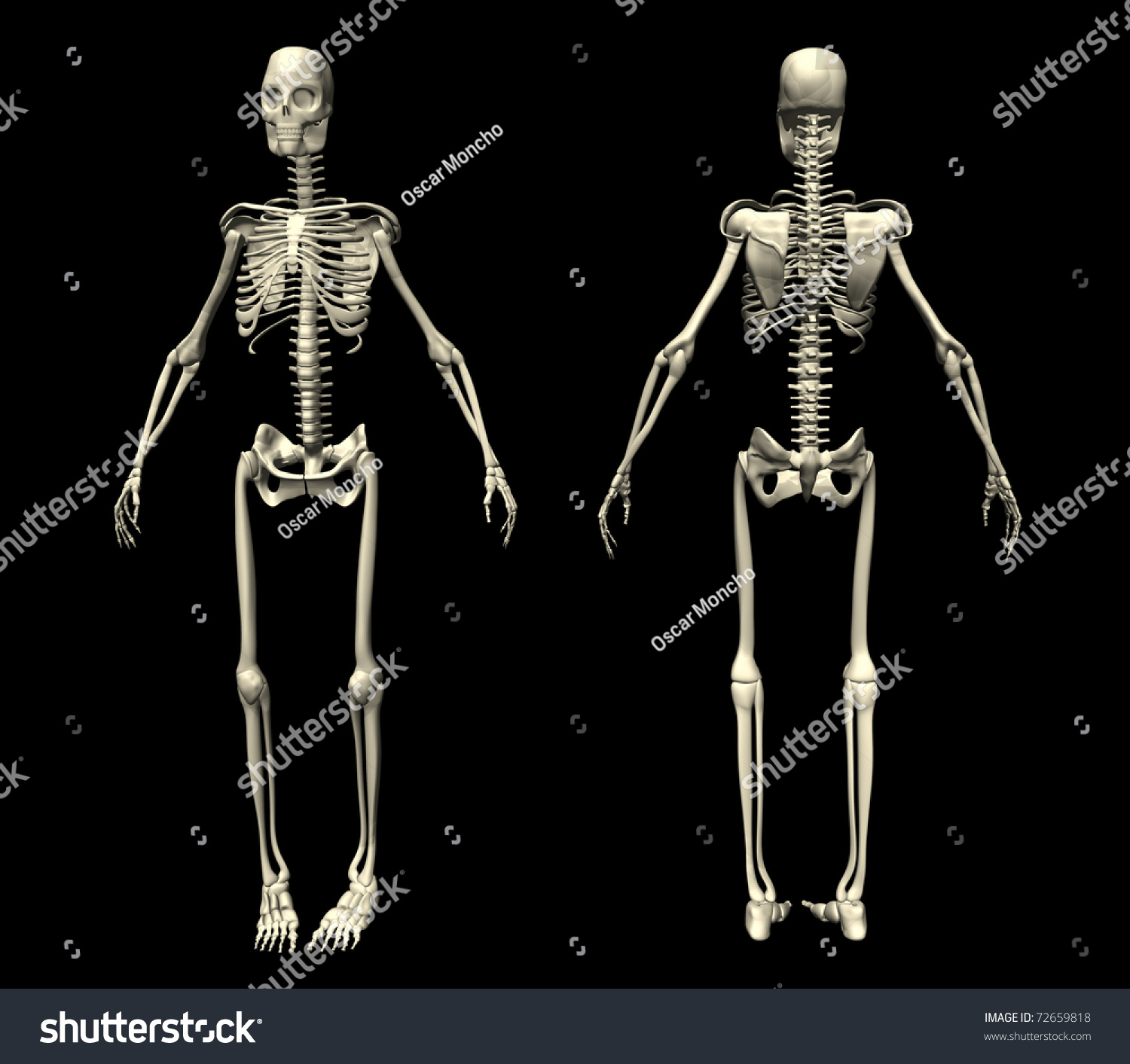 skeleton illustration seen before behind stock illustration, Skeleton