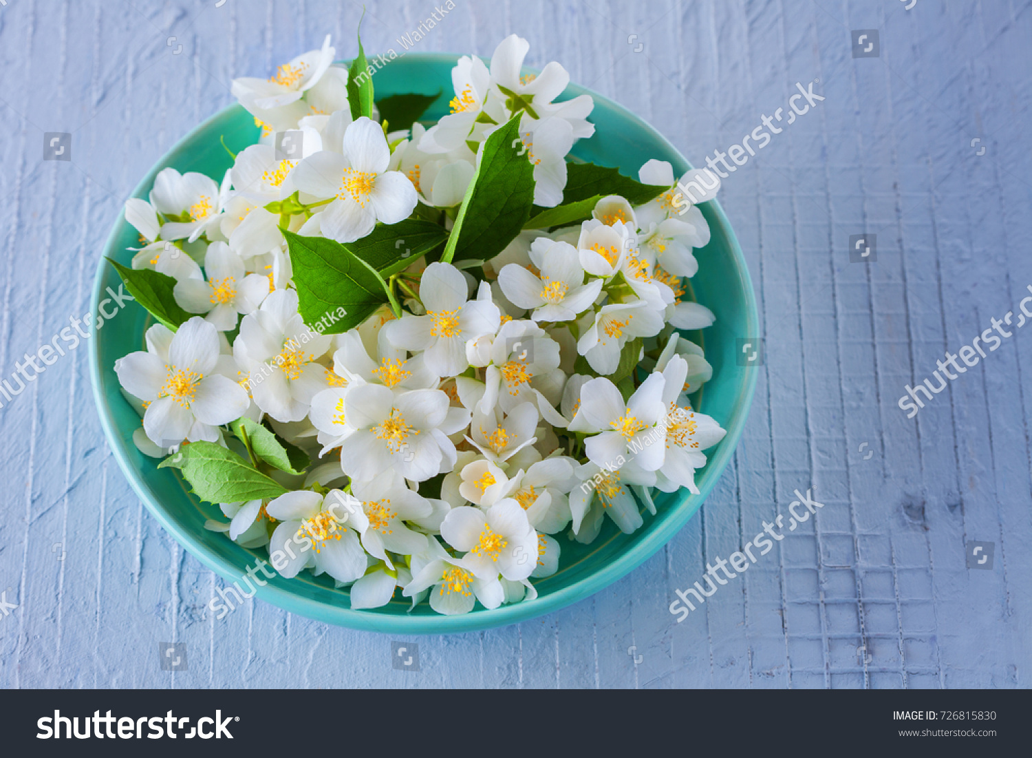 Lots Jasmine Flowers Flowers Plants Stock Photo Edit Now 726815830