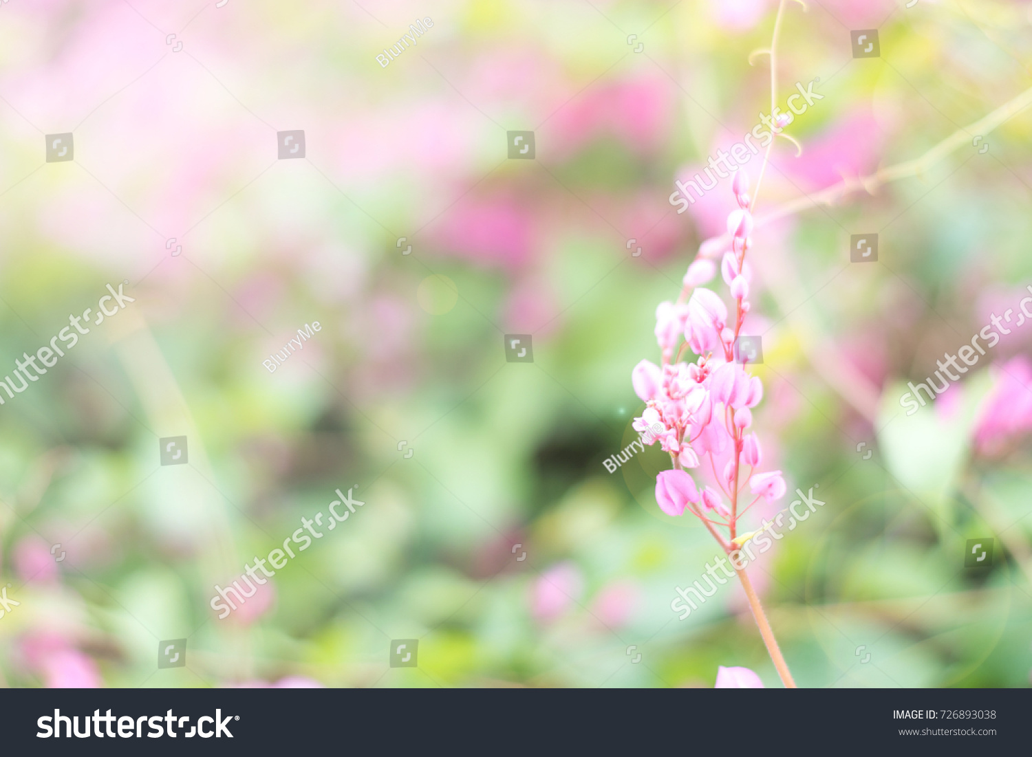 May Flowers Field Pink Blossom Garden Stock Photo Royalty Free