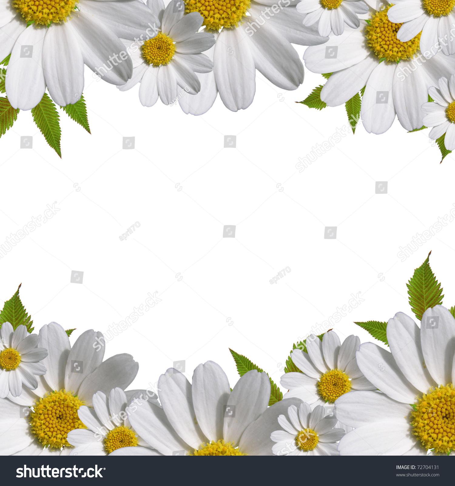 Daisy flowers border copy space stock illustration 72704131 daisy flowers border with copy space izmirmasajfo