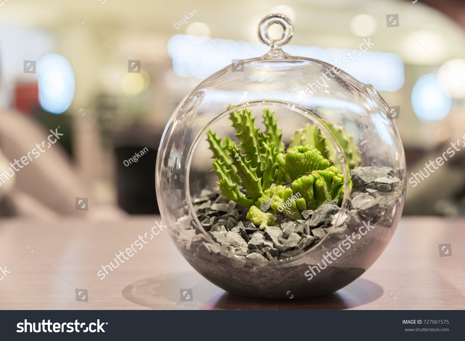 Catcus Glass Terrarium On Wood Table Stock Photo Edit Now 727061575