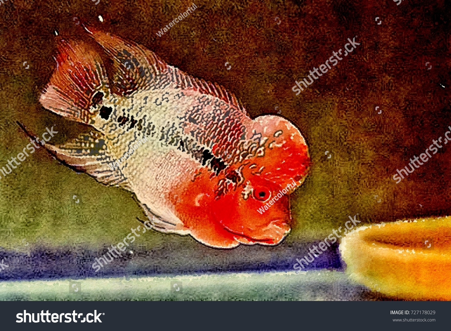 Kamfa Luohanred Dragon Flower Horn Cichlid Stock Illustration ...