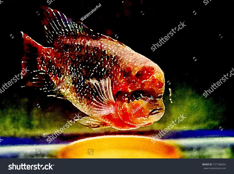 Quetzelredheadfirehead Cichlid Vieja Synspilum Fish Typebig Stock ...