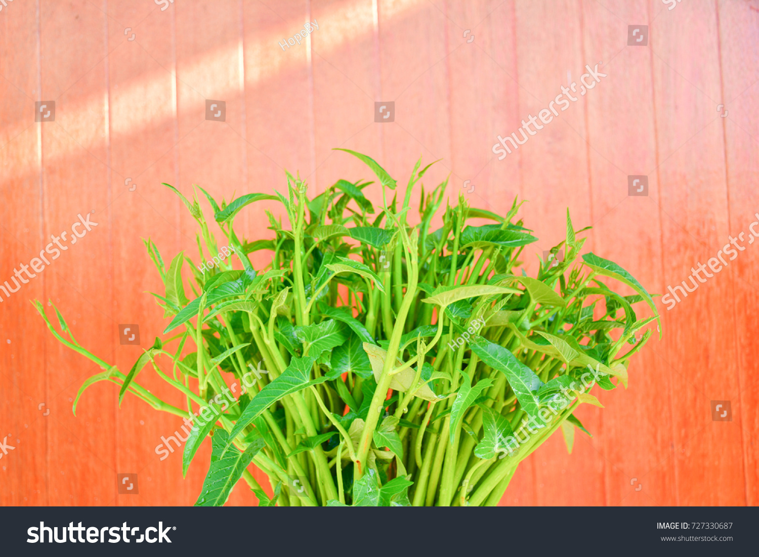 swamp cabbage or morning glory , fresh tropical vegetable