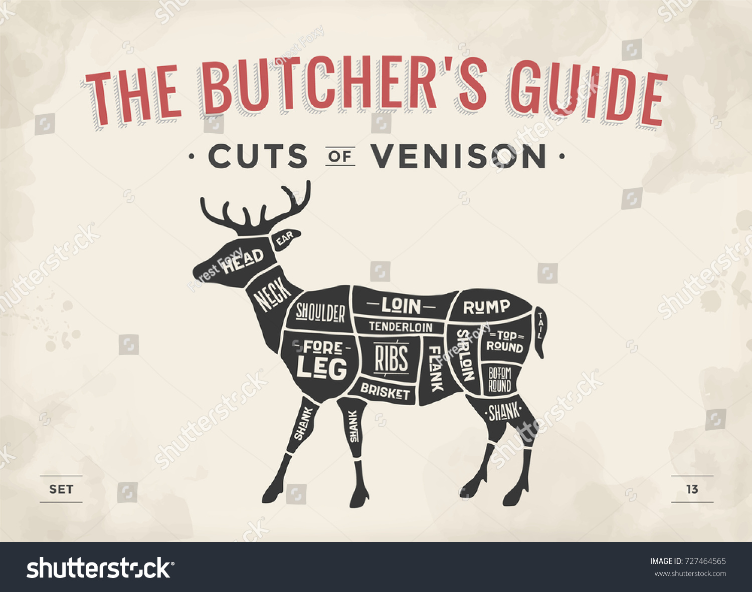 stock photo cut of meat set poster butcher diagram scheme venison vintage typographic hand drawn deer 727464565 cutting up deer diagram field dressing a deer diagram \u2022 wiring  at bayanpartner.co