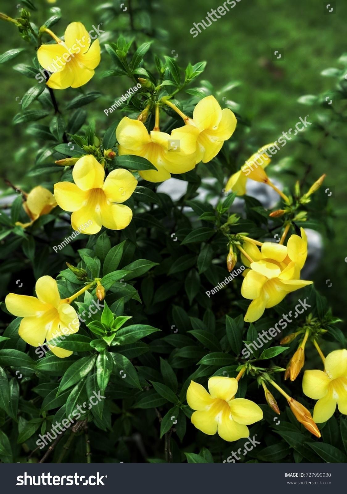 Tiny Yellow Flowers Stock Photo Edit Now 727999930 Shutterstock