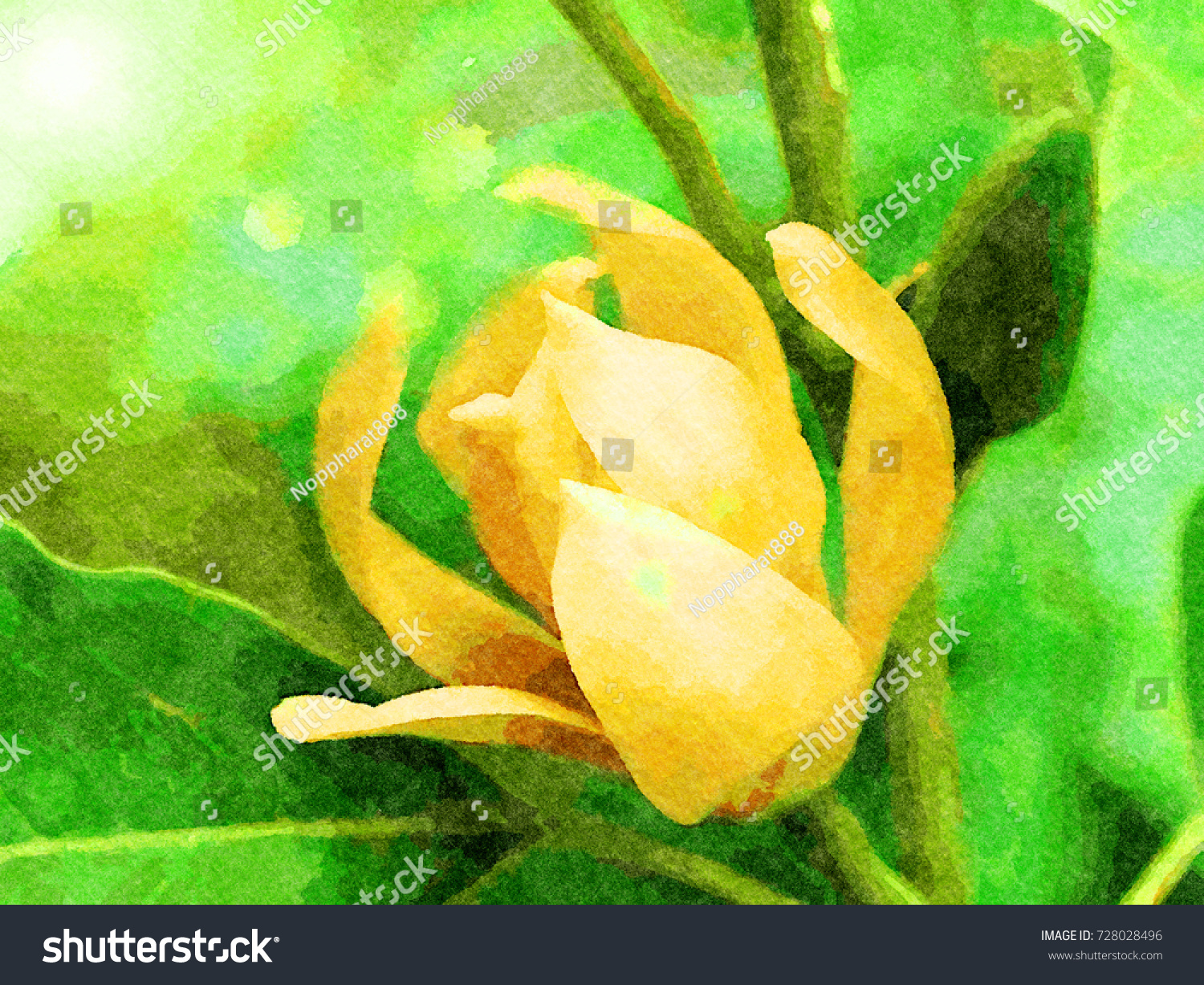 Watercolor Image Fragrant Yellow Flowers Refreshing Stock