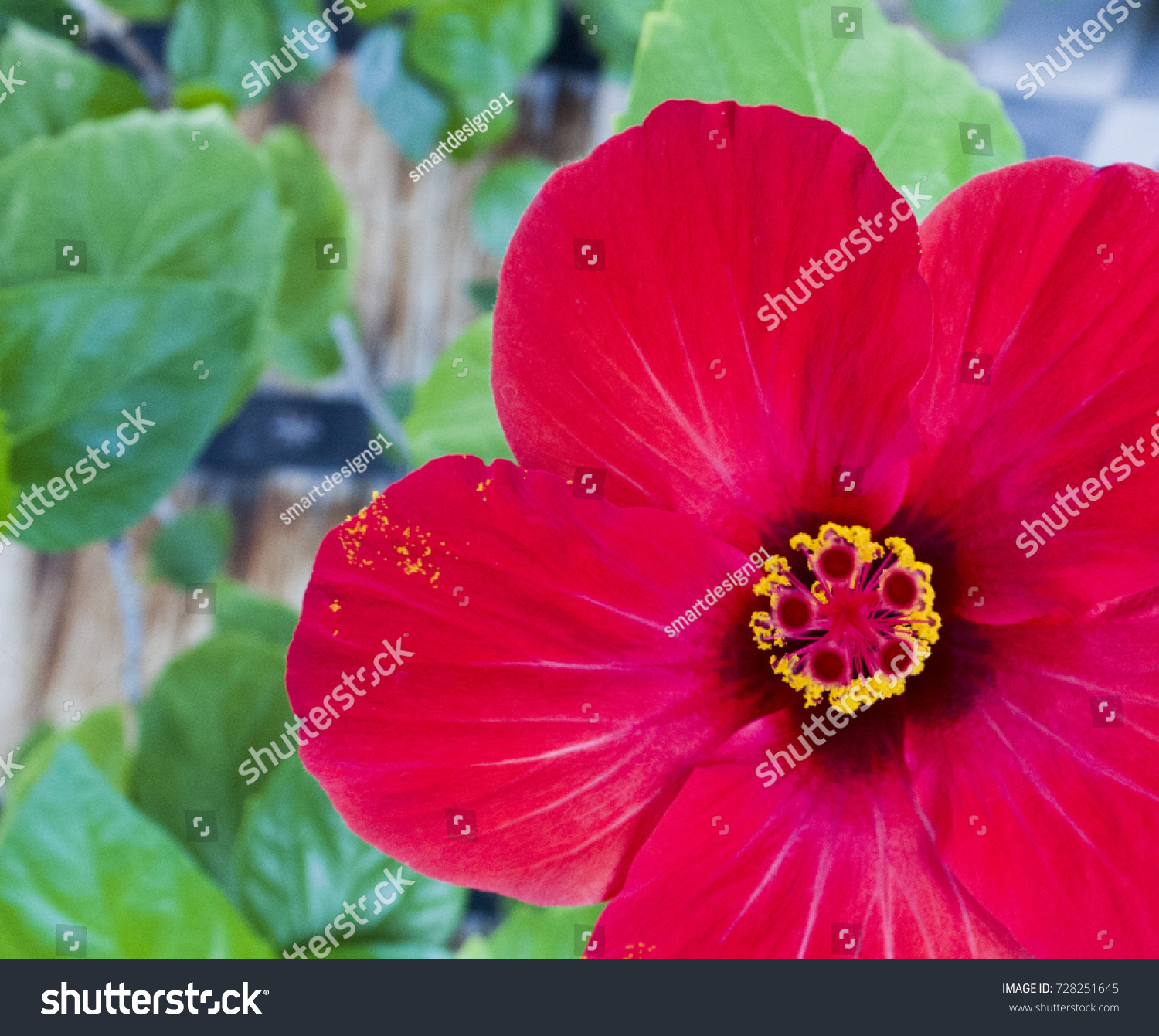 The diagram of a hibiscus flower beautiful flower 2017 anatomy of hibiscus flower flowers ideas pooptronica Image collections