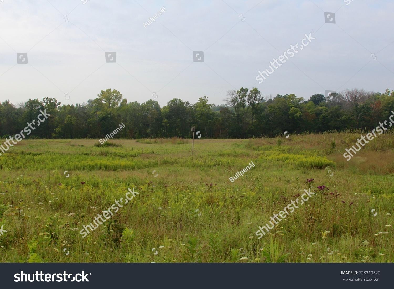 tall grass field grassland id 728319622 the tall grass field landscape in the park ez canvas