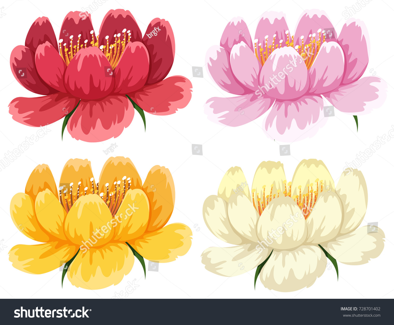 Four Colors Same Type Flower Illustration Stock Vector Hd Royalty