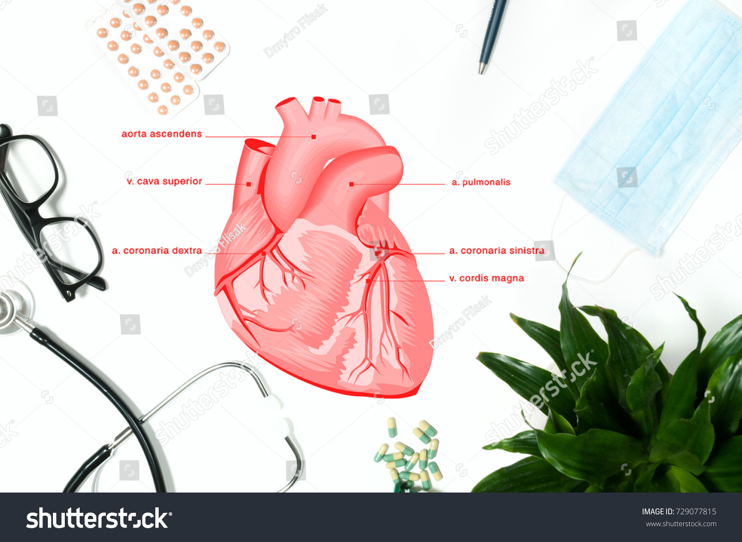 Anatomy Workplace Doctor Stethoscope Medical Items Stock Photo ...