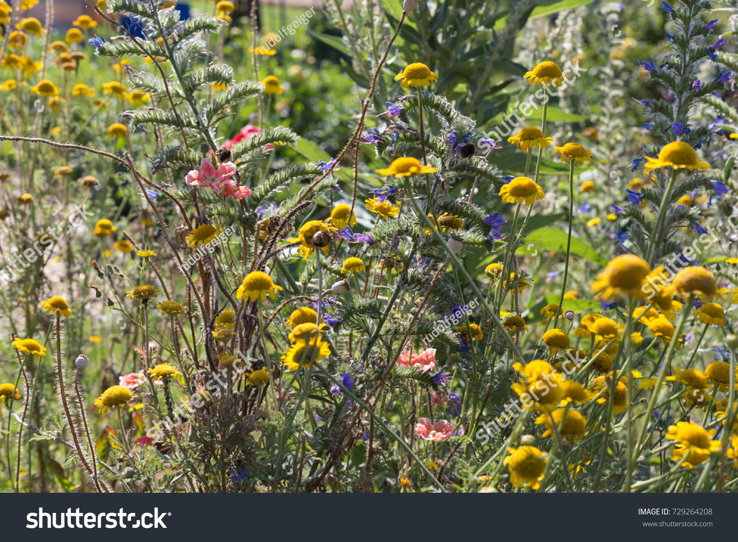 On very sunny day july south stock photo 729264208 shutterstock on a very sunny day in july in south germany you see details and colors of izmirmasajfo Choice Image