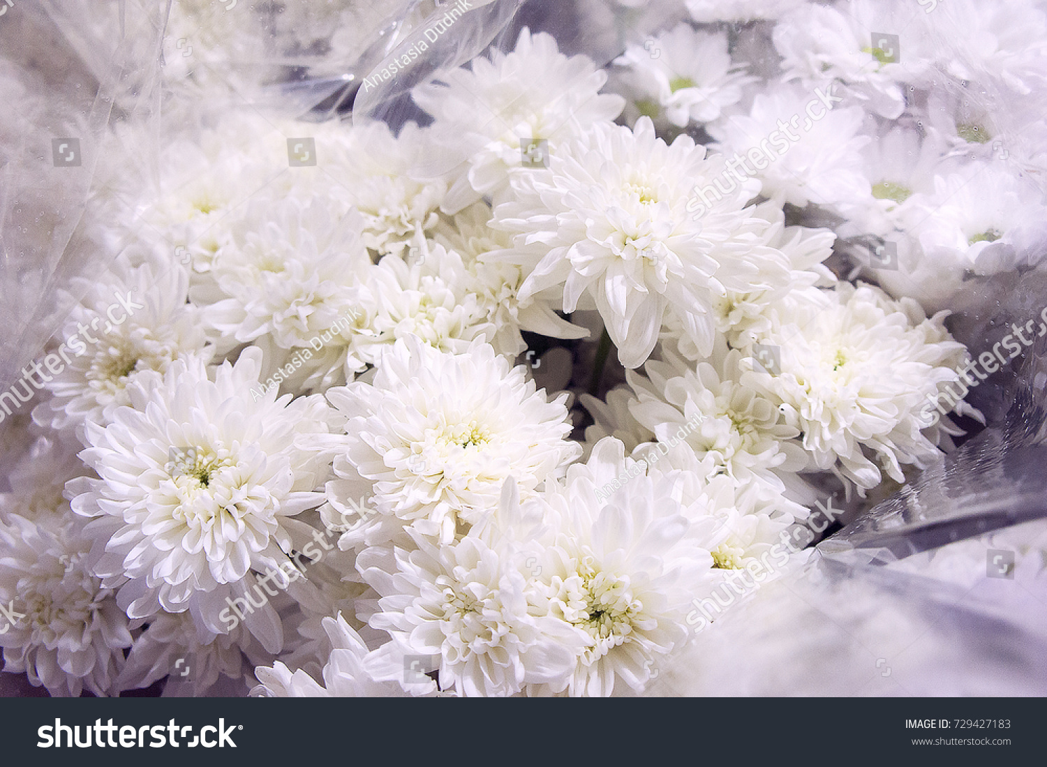 Awesome white chrysanthemum flower meaning image top wedding gowns nice white chrysanthemum flower meaning festooning wedding and mightylinksfo