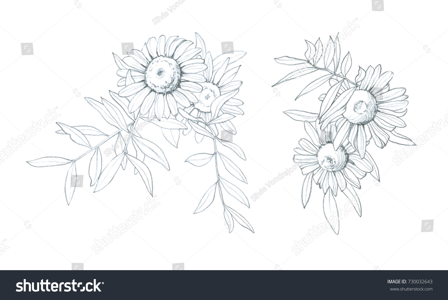 Daisy flower hand pencil drawing stock illustration 730032643 daisy flower hand pencil drawing izmirmasajfo