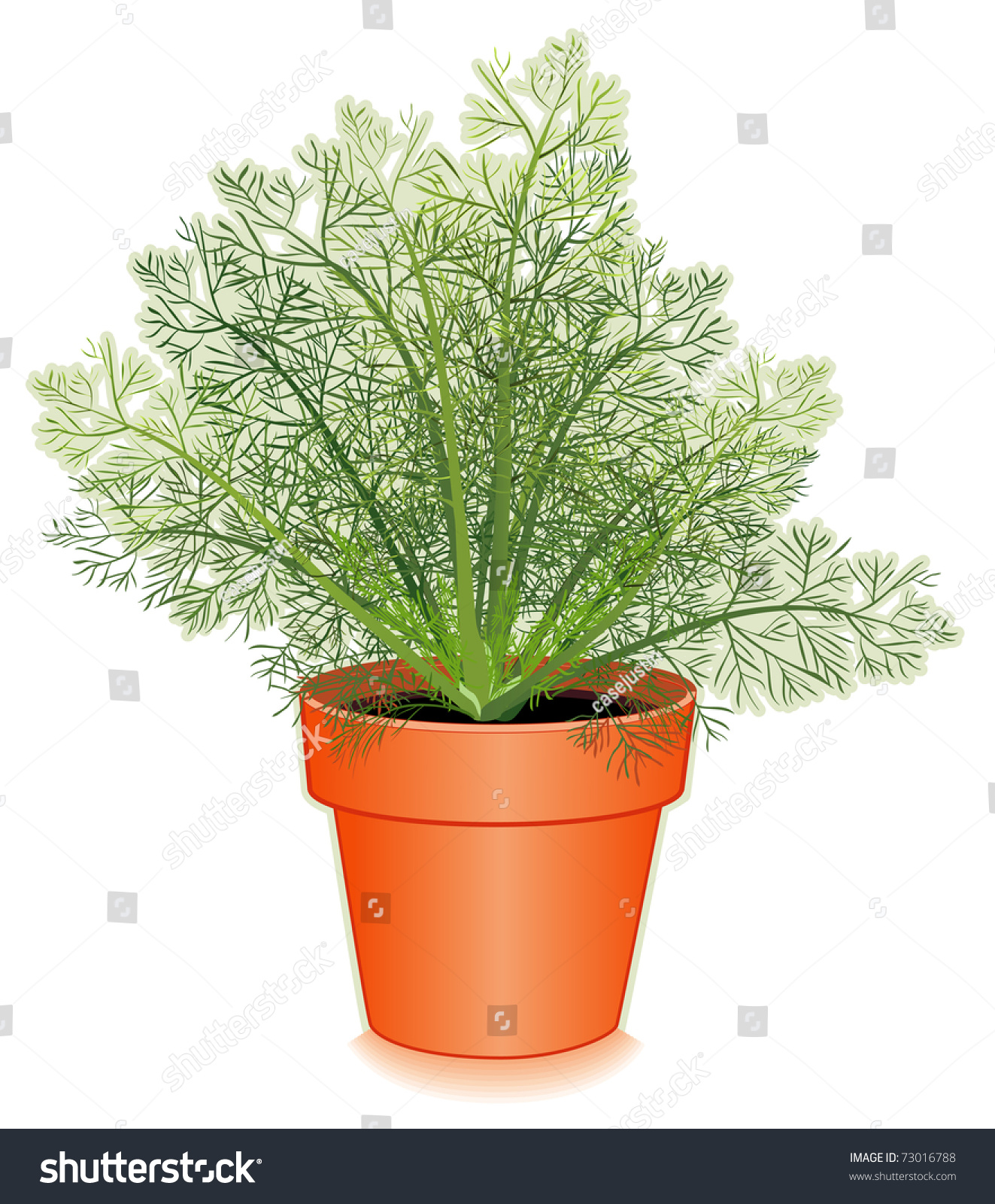 Dill herb in clay flowerpot thin lacy needle like aromatic leaves used in cooking and - Aromatic herbs pots multiple benefits ...