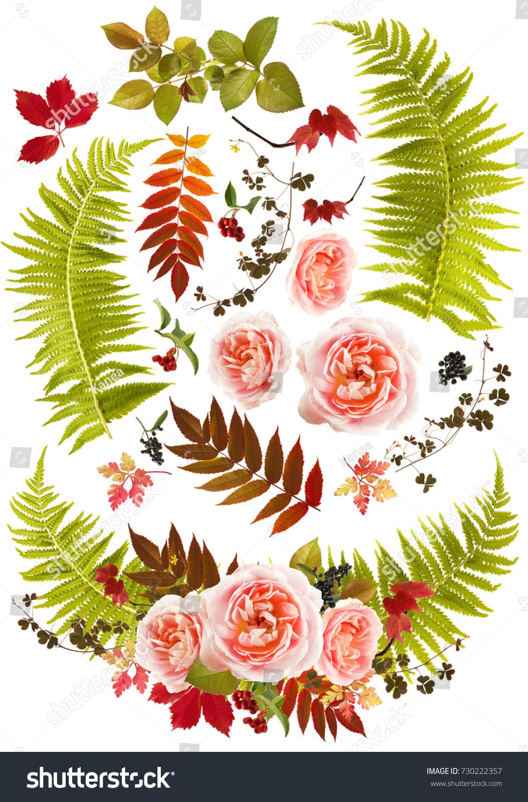 Rose Flower Bouquet Clip Art Single Stock Photo Edit Now 730222357