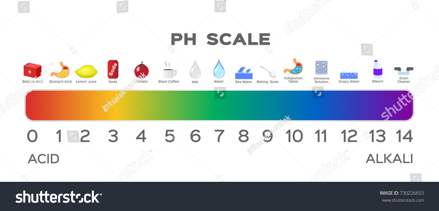 Ph Scale Vector Graphic Acid Base Stock Vector 730226653 ... for Ph Scale Acids And Bases  588gtk