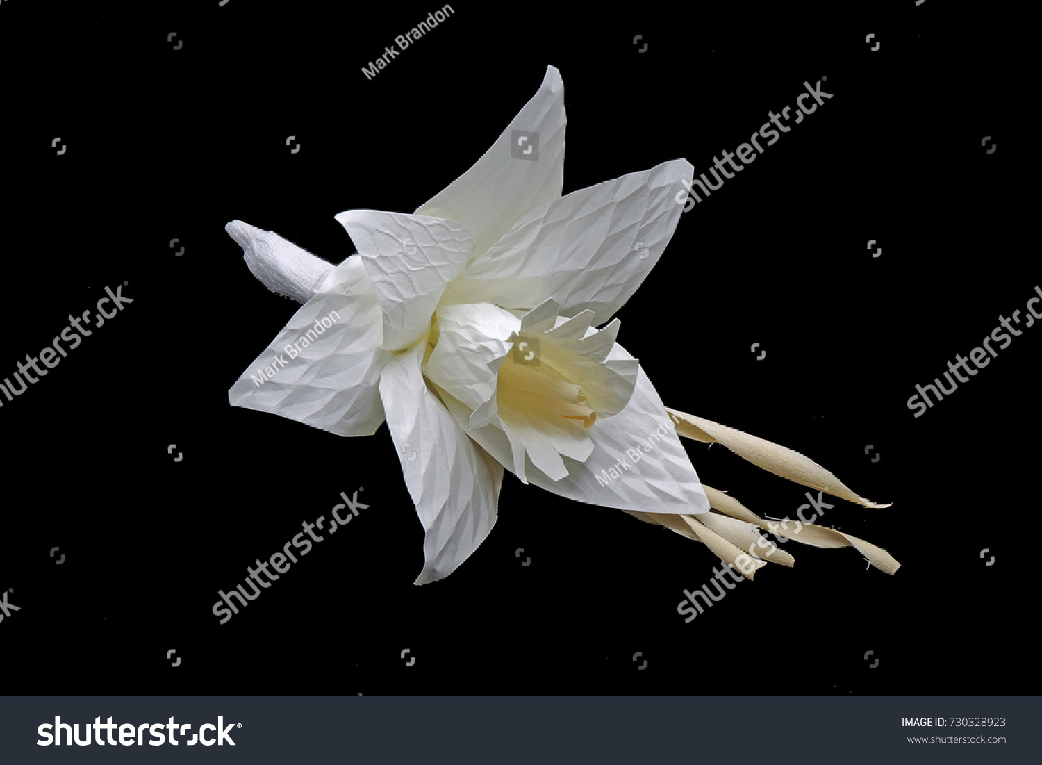 White Lily Isolated On Black Ez Canvas