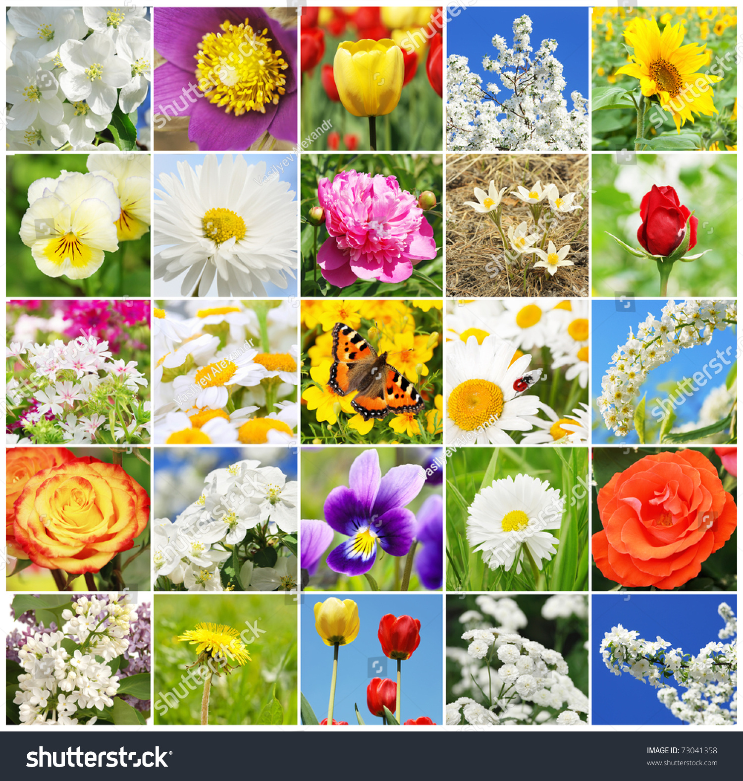 Collage different beautiful flowers stock photo royalty free collage from different beautiful flowers izmirmasajfo