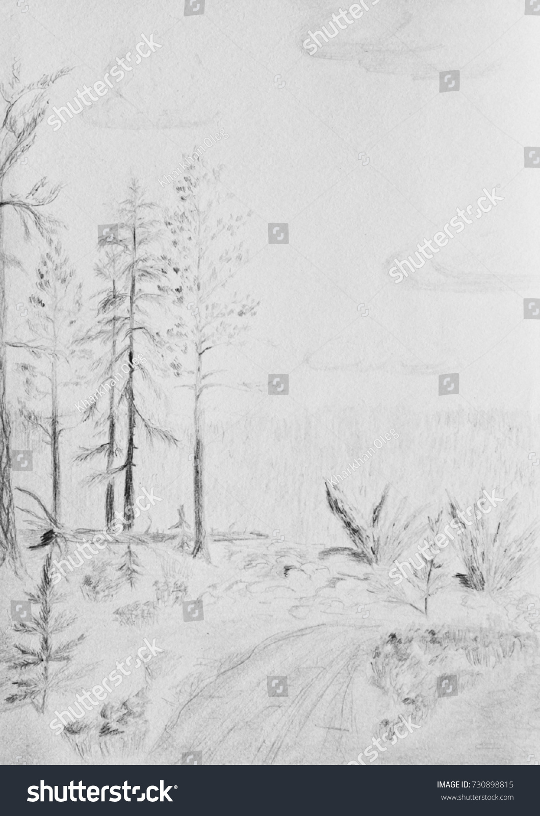Summer Landscape With Pine Trees Pencil Drawing
