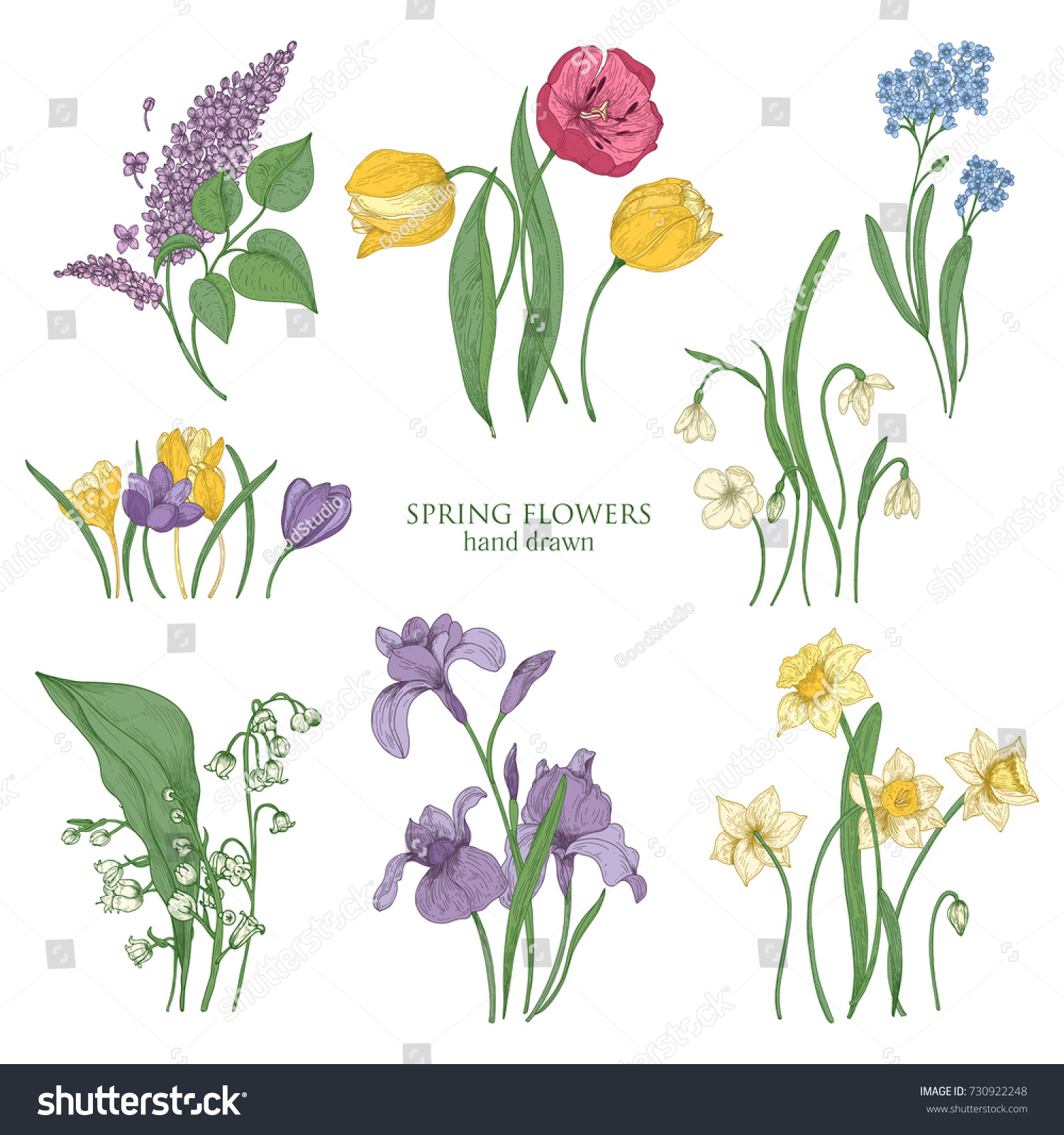 Collection Blooming Spring Flowers Flowering Plants Stock Vector
