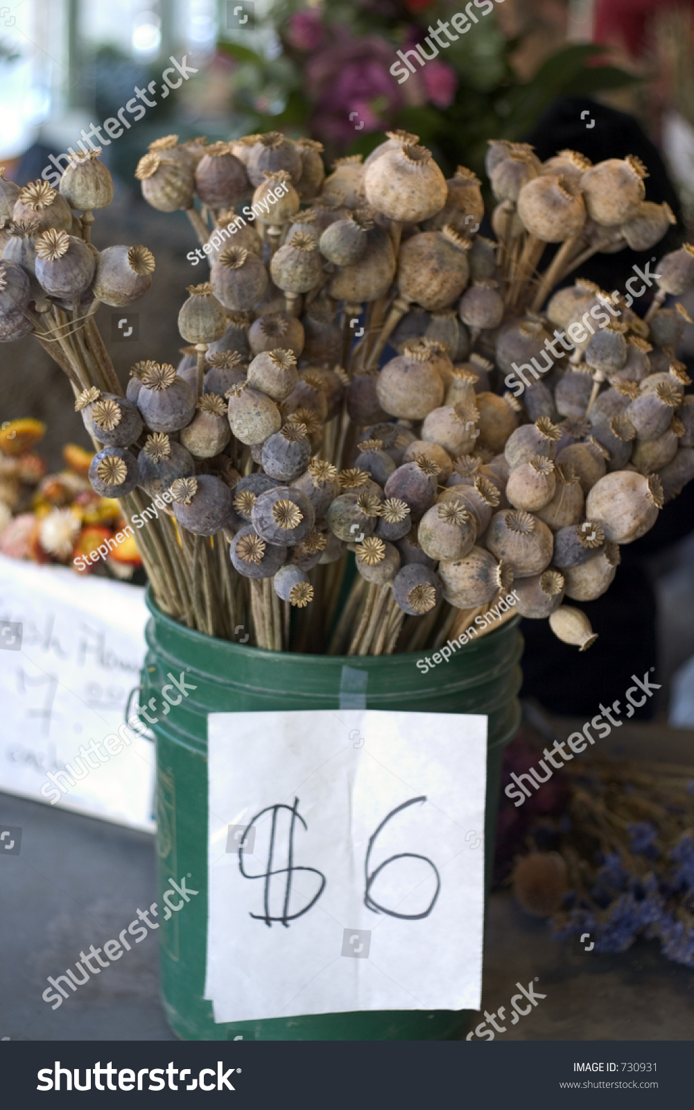 Dried Poppy Seed Pods Sale Pike Stock Photo Edit Now 730931