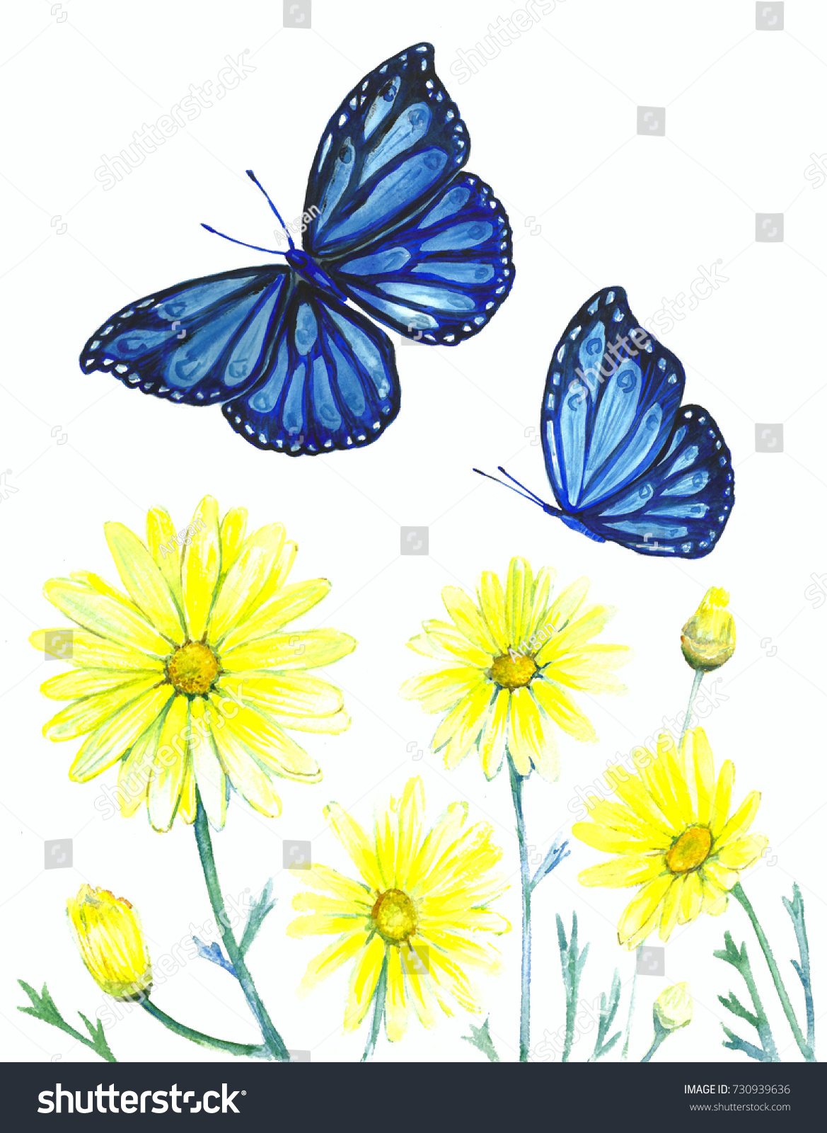 watercolor illustration botanical flowers butterflies drawing