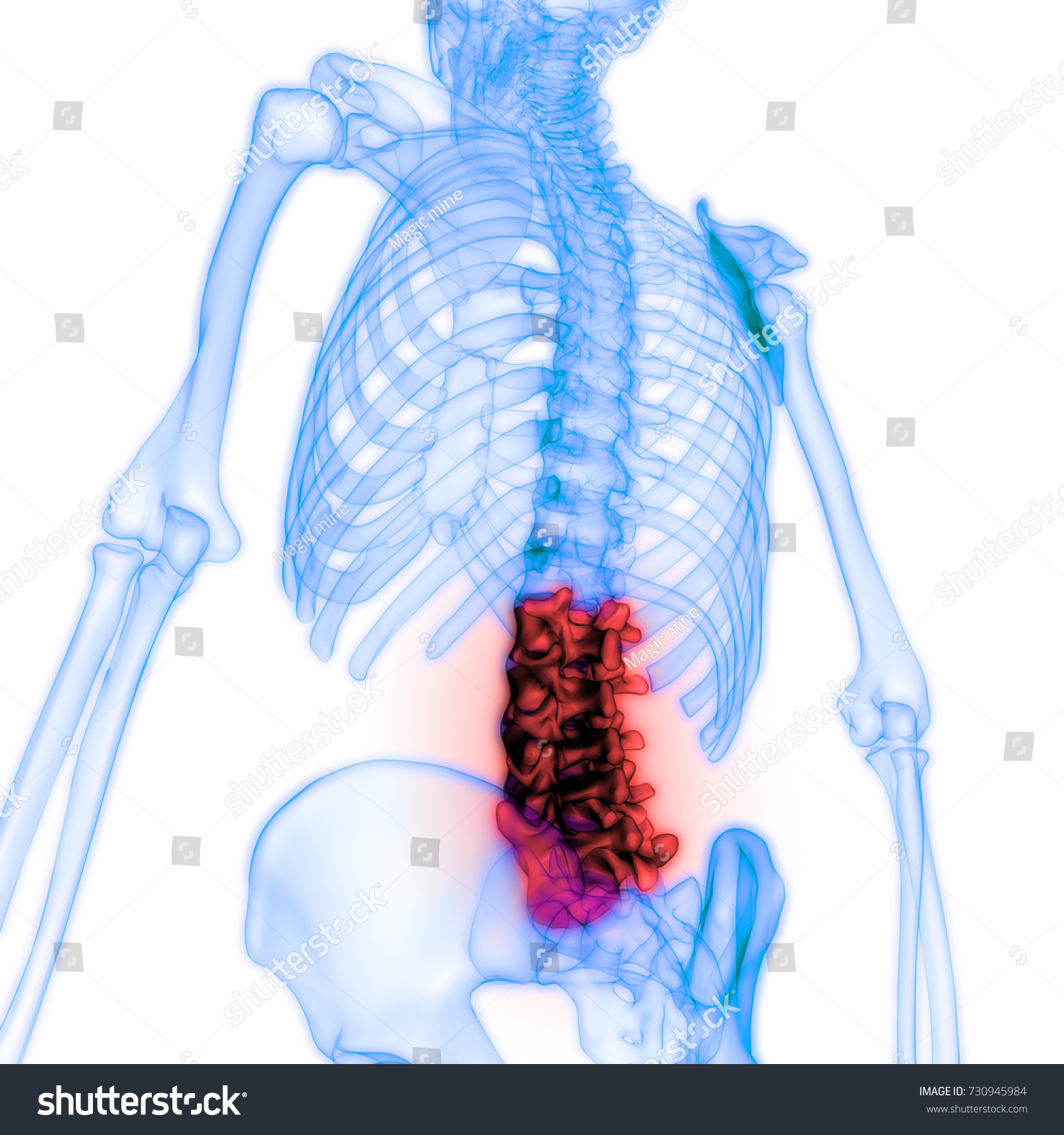 Human Skeleton Vertebral Column Anatomy Lumbar Stock Illustration ...
