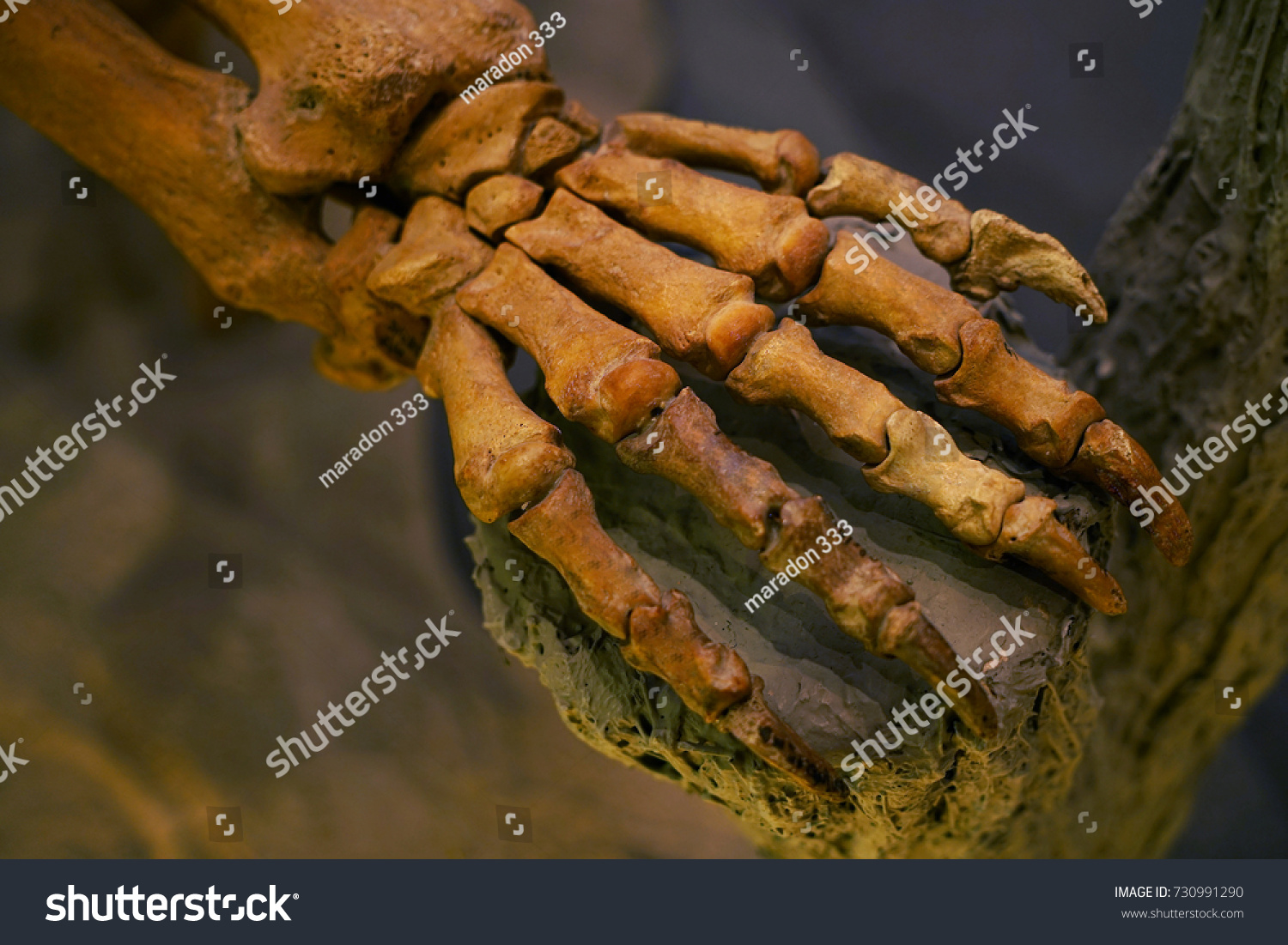 Mammal Arm Bone Hold Tree Trunk Stock Photo (Royalty Free) 730991290 ...