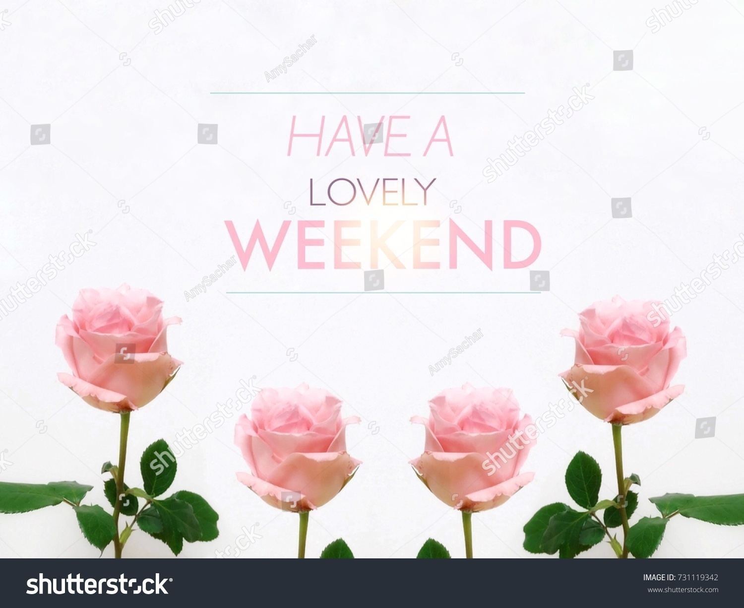have a lovely weekend word and pink roses on white background