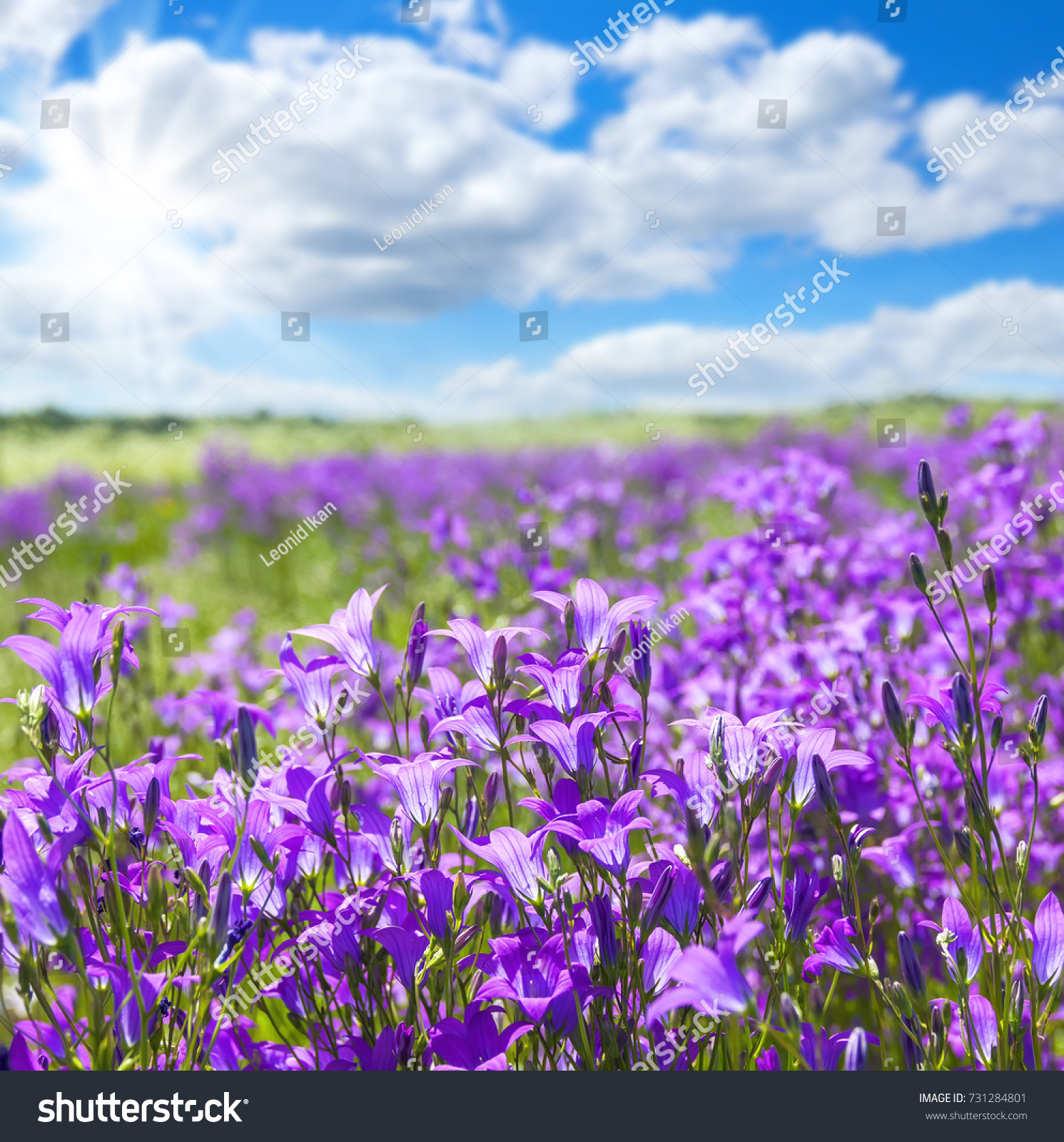 Summer Bright Scenery Field Of Beautiful Flowers Bells With Blue
