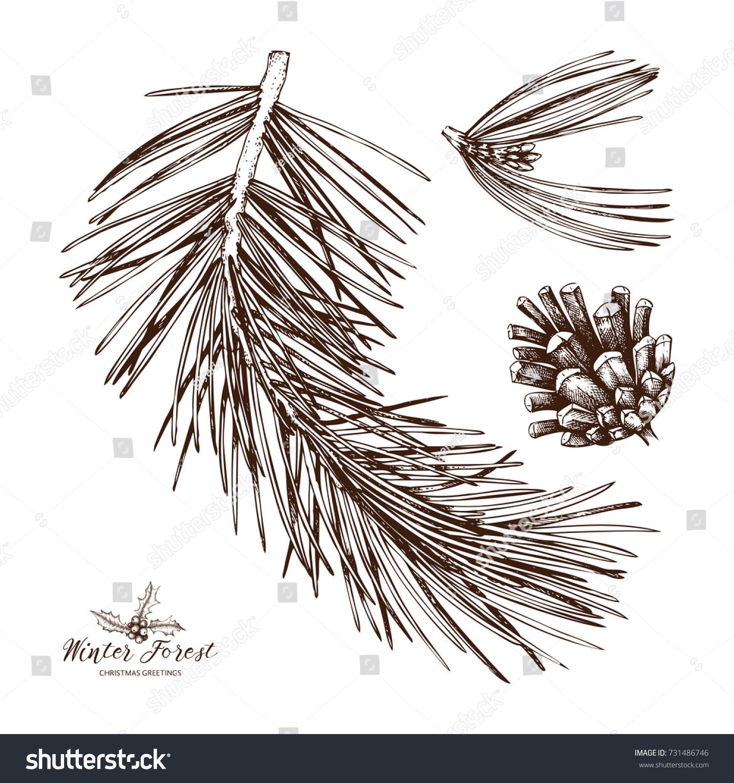 Vintage Pine Tree Illustration Hand Drawn Stock Vector 731486746