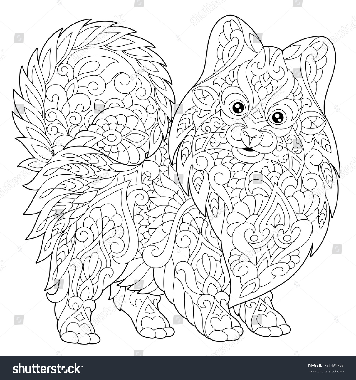 coloring page pomeranian dog symbol 2018 stock vector 731491798