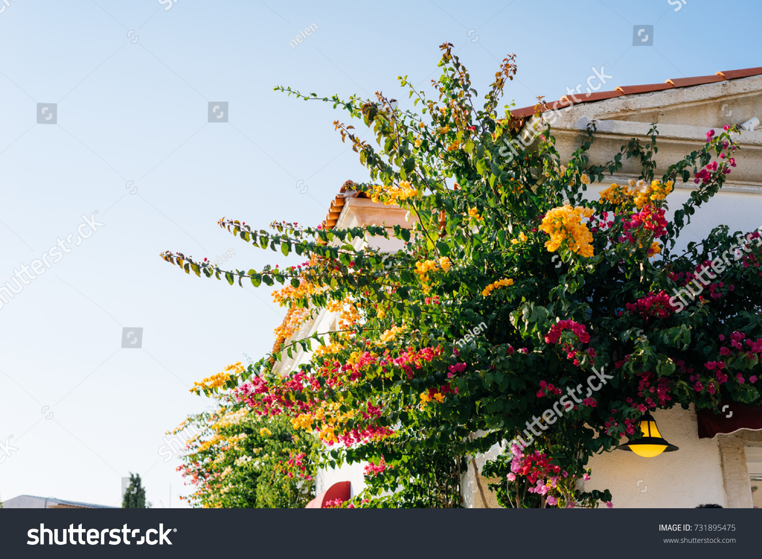 Roof Flowers Beautiful Tree Colorful Flowers Stock Photo Edit Now