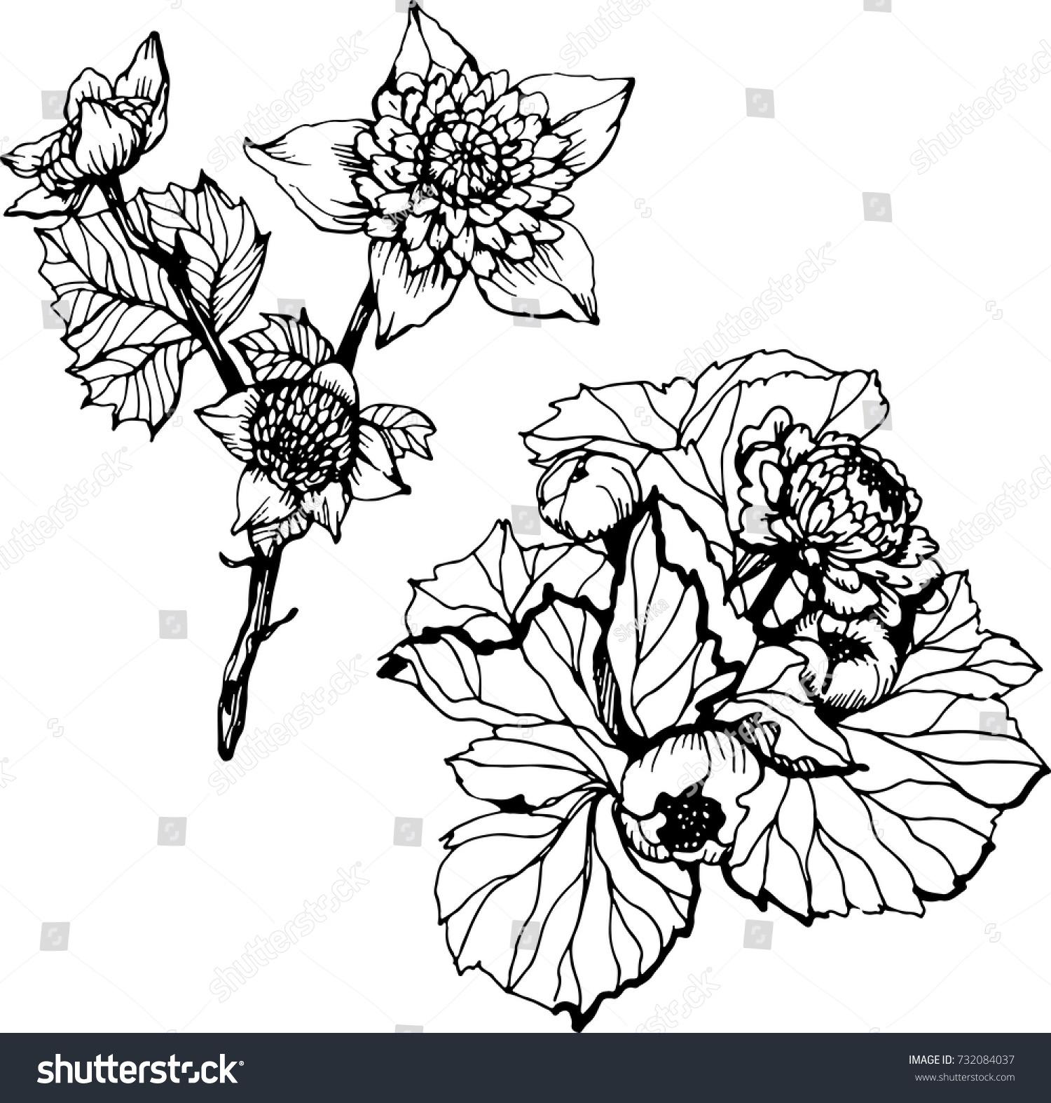 Set Ink Black White Flowers Pattern Stock Vector Royalty Free