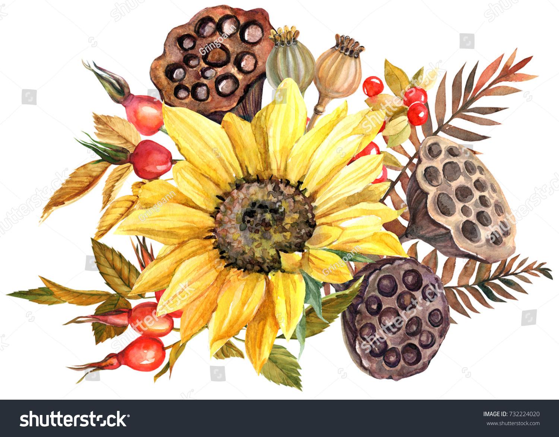 Watercolor Drawing Autumn Bouquet Sunflower Lotus Stock Illustration 732224020
