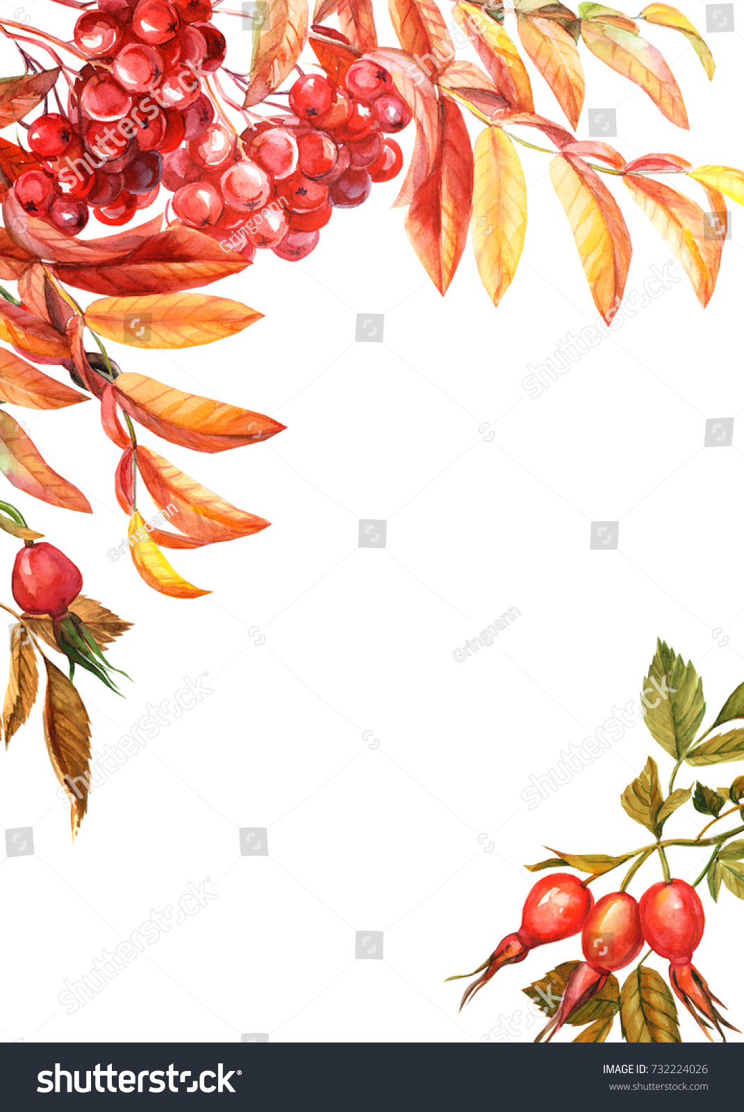Watercolor Drawing Autumn Composition Rowan Berries Stock