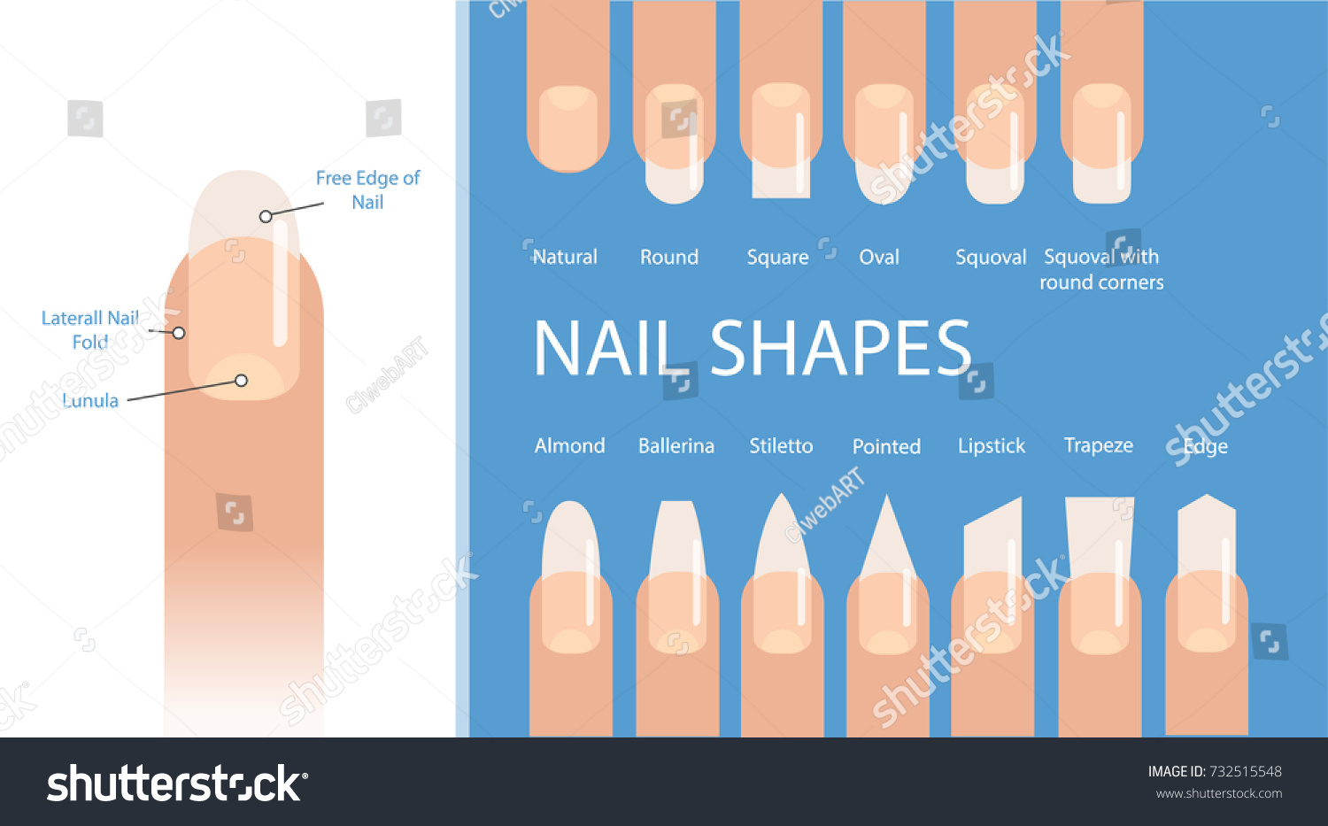 Nail Forms Female Manicure Set Kinds Stock Vector 732515548 ...