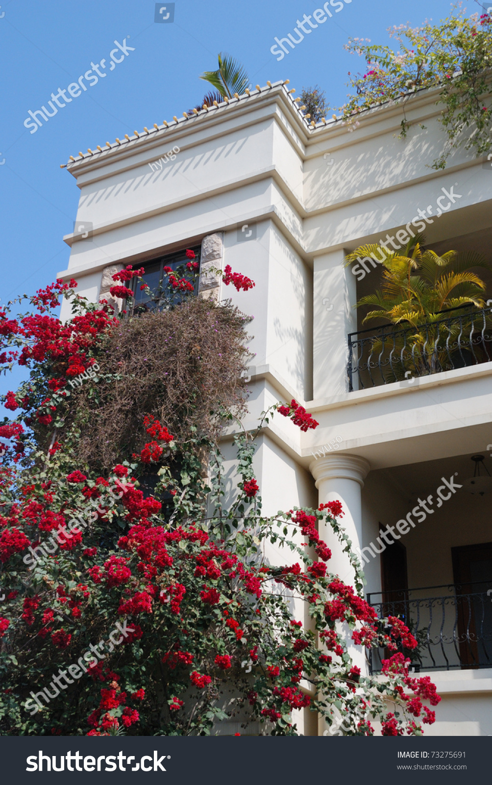 White House Red Flowers Stock Photo Edit Now 73275691 Shutterstock
