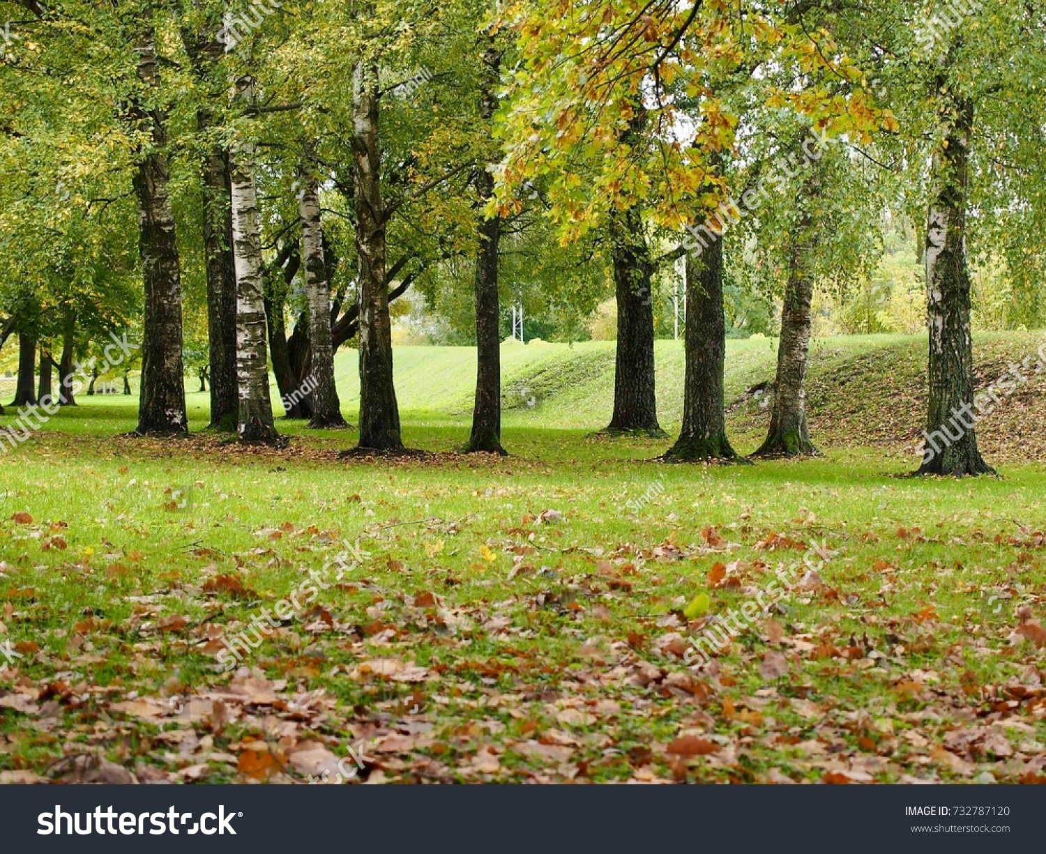Autumn Park Trees Leaves On Grass Stock Photo (Royalty Free ...