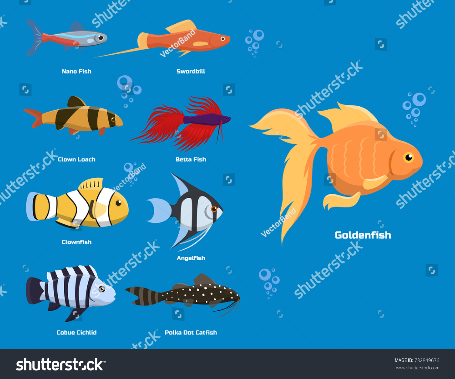 Exotic tropical aquarium fish different colors stock Types of fish aquarium