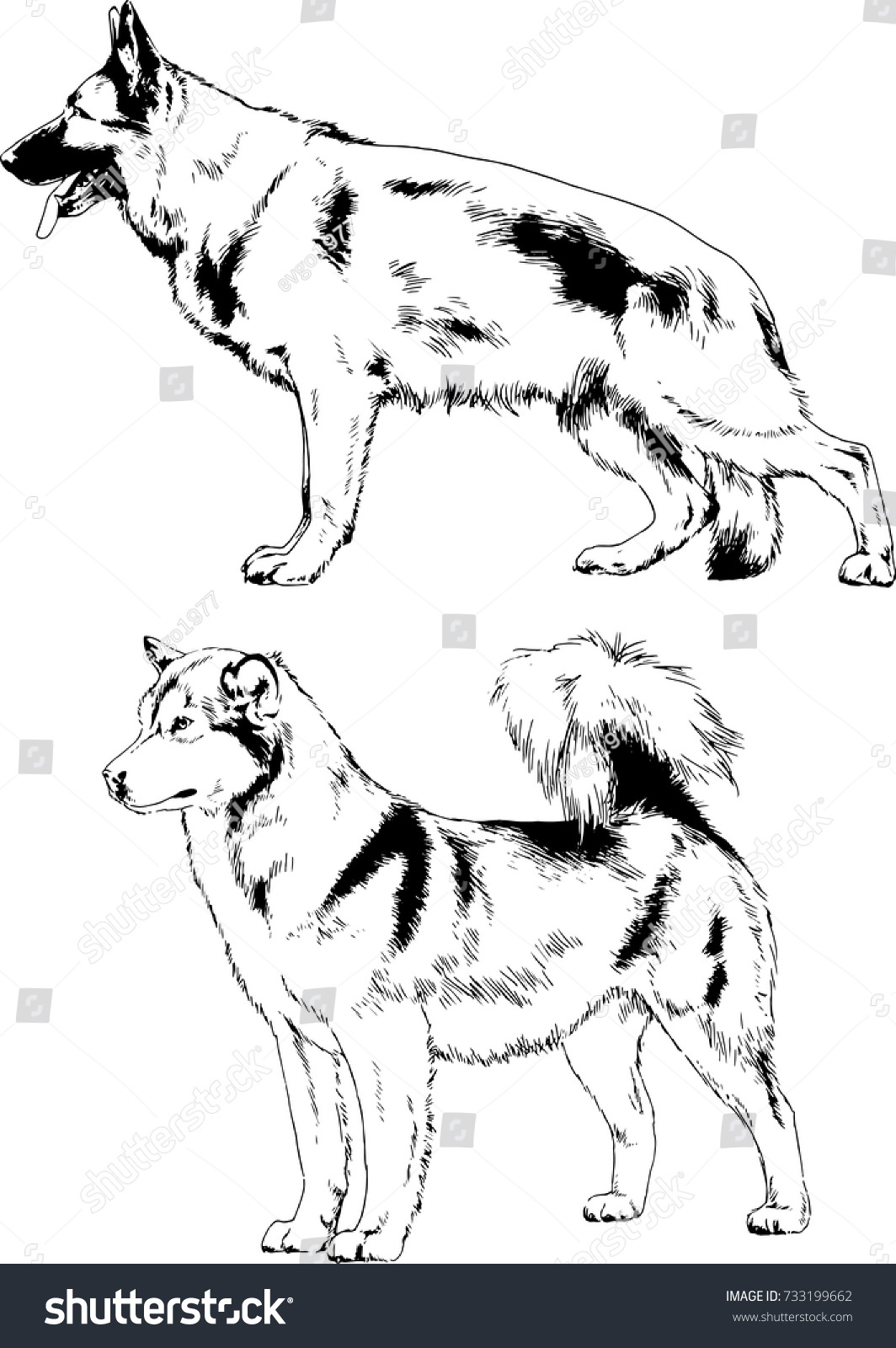 Guard Service Dogs Handdrawn Ink No Stock Vector Royalty Free