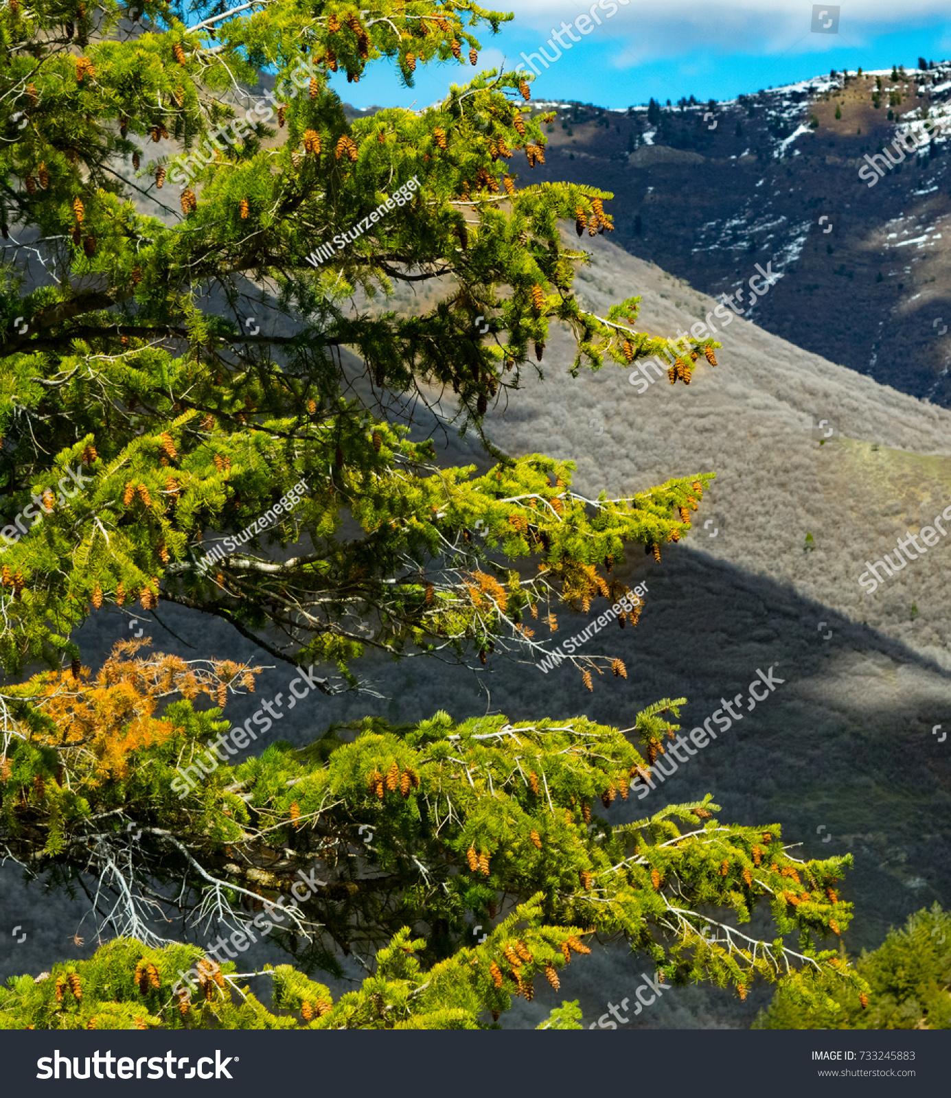 Awesome Landscaping Salt Lake City Utah